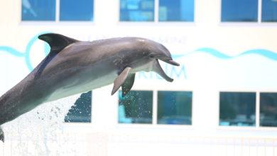Nicholas le dauphin au Clearwater Marine Aquarium
